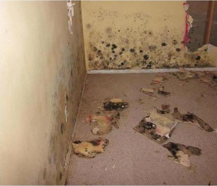 Safe mold remediation Before