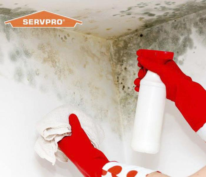 Mold Remediation The Leader Eliminating Indoor Mold